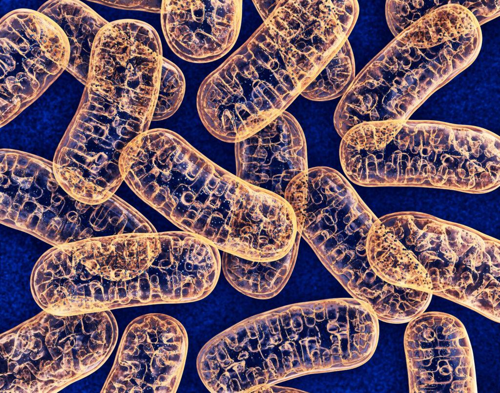 Visste du att cellerna i din kropp producerar ungefär 80 kg energi per dygn?